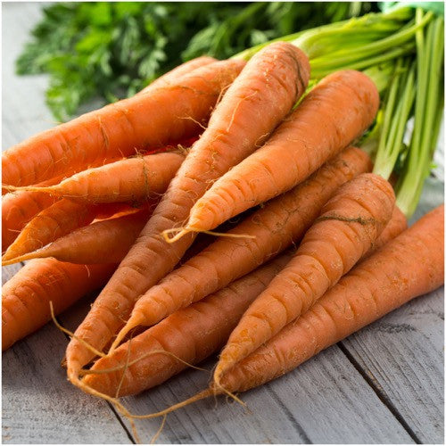 Tendersweet carrot