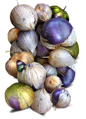 Purple Tomatillo seeds for planting