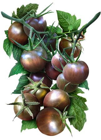Black Cherry Tomato Seeds