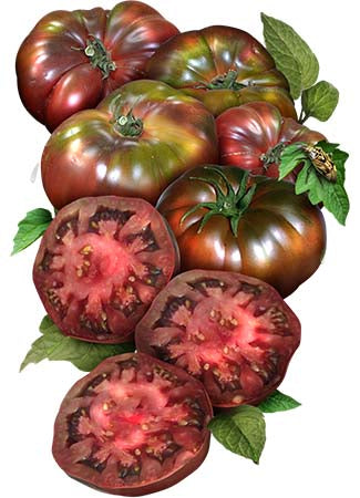Black Krim Tomato Seeds (Lycopersicon esculentum)