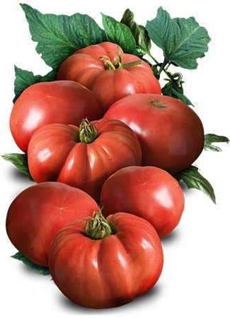 German Johnson Tomato Seeds (Solanum lycopersicum)