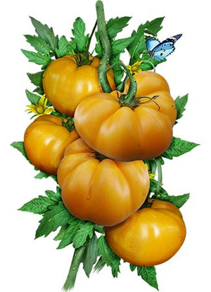 Yellow Brandywine Tomato Seeds (Lycopersicon esculentum)