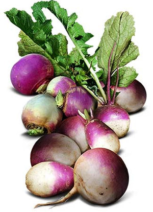 Purple Top White Globe Turnip Seeds (Brassica rapa)