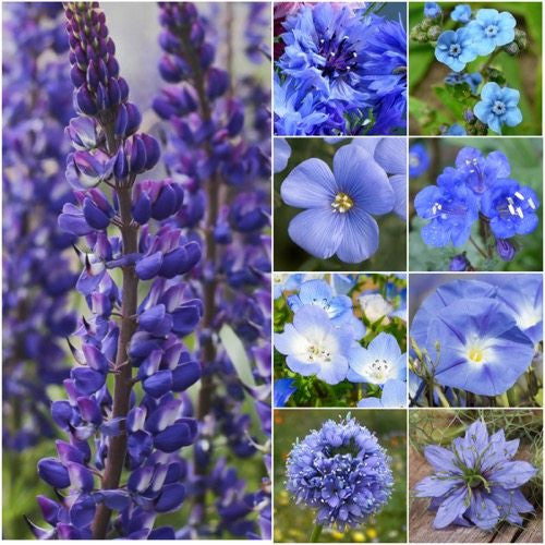 Dazzling Blue Wildflower Mixture