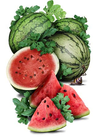 Cal Sweet Watermelon Seeds (Citrullus lanatus)