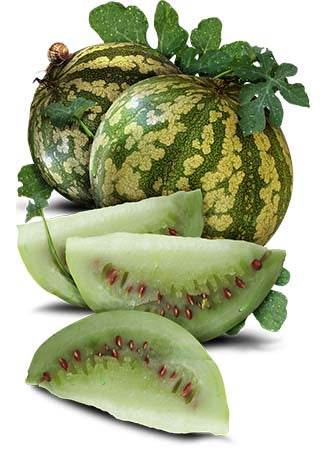 Citron Red Seeded Watermelon Seeds (Citrullus lanatus)