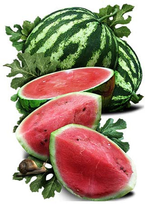 Crimson Sweet Watermelon Seeds (Citrullus lanatus)