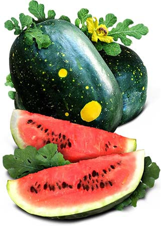 "Moon & Stars Watermelon Seeds ""Van Doren"" (Citrullus lanatus)"