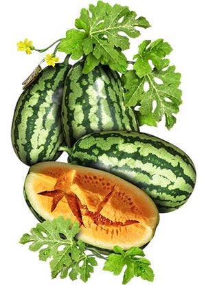 Orangeglo Watermelon Seeds (Citrullus lanatus)