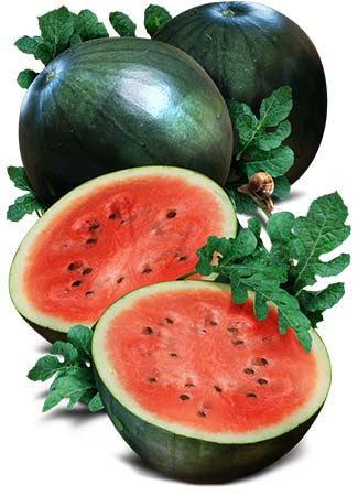 Sugar Baby Watermelon Seeds (Citrullus lanatus)