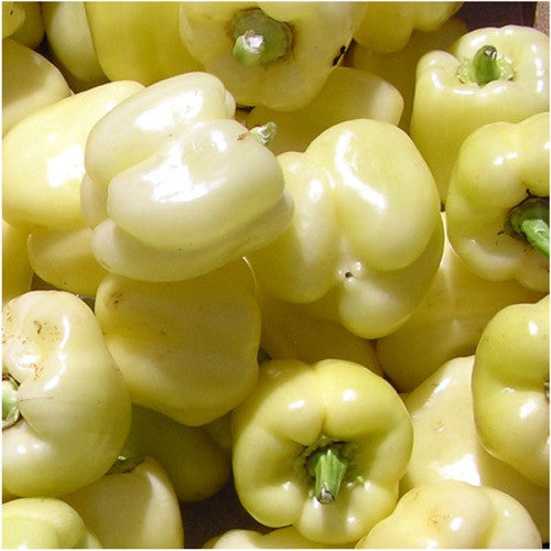 white bell pepper
