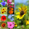 All Annual Wildflower Mixture