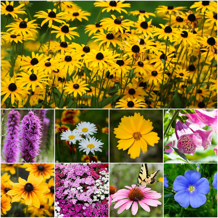 Perennial Wildflower Mixture (16 Species Included)