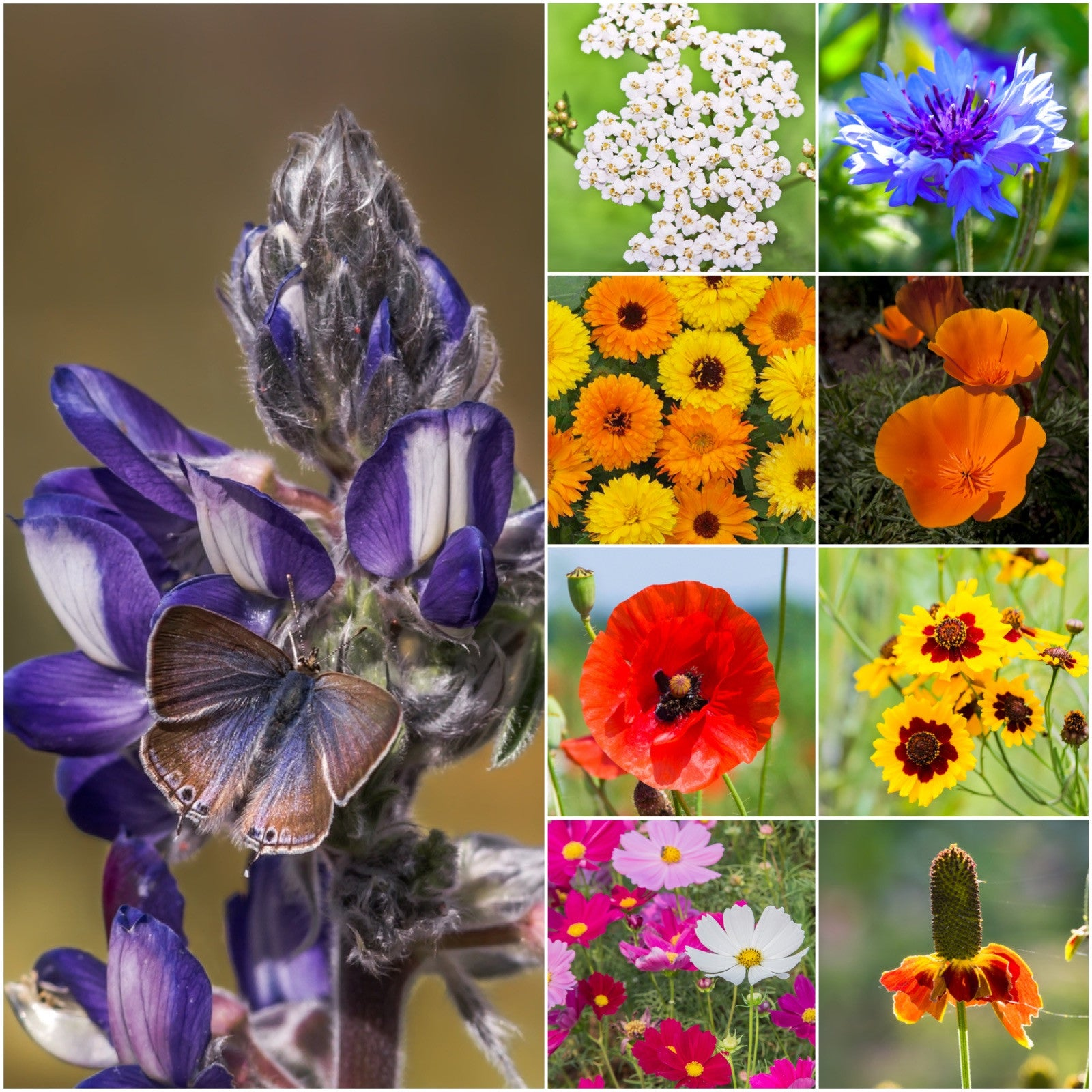 Bird and butterfly wildflower mixture seed collections izmirmasajfo