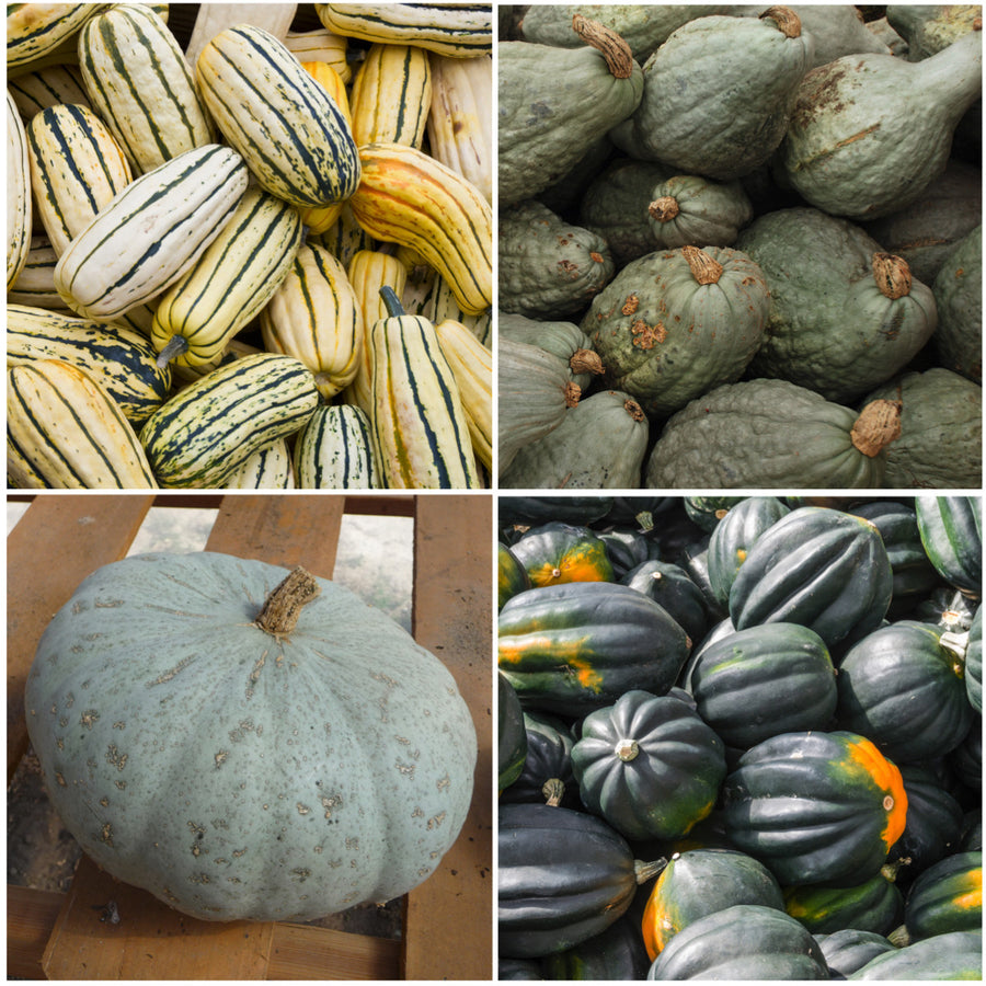 winter squash seed