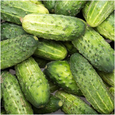 wisconsin pickling cucumber