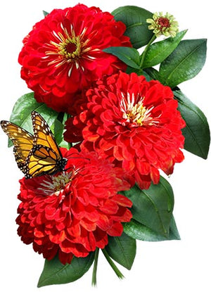Cherry Queen Zinnia Seeds (Zinnia elegans)