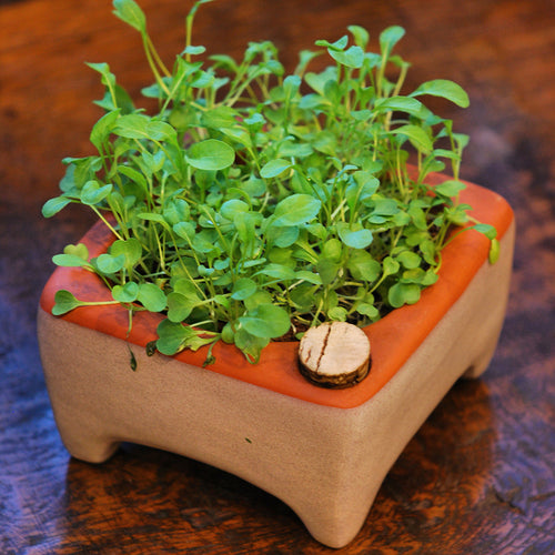 Garden: Microgreens Growing Kit