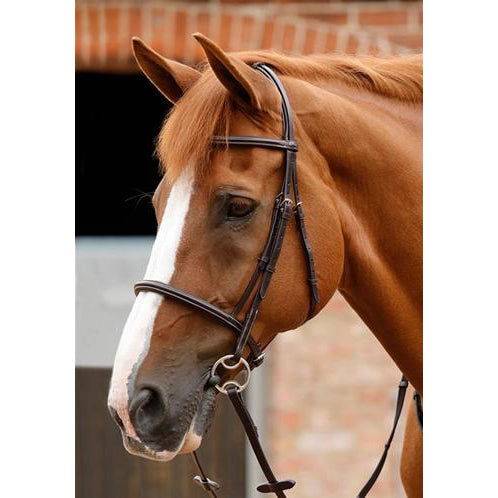Mossimo Cavesson Bridle