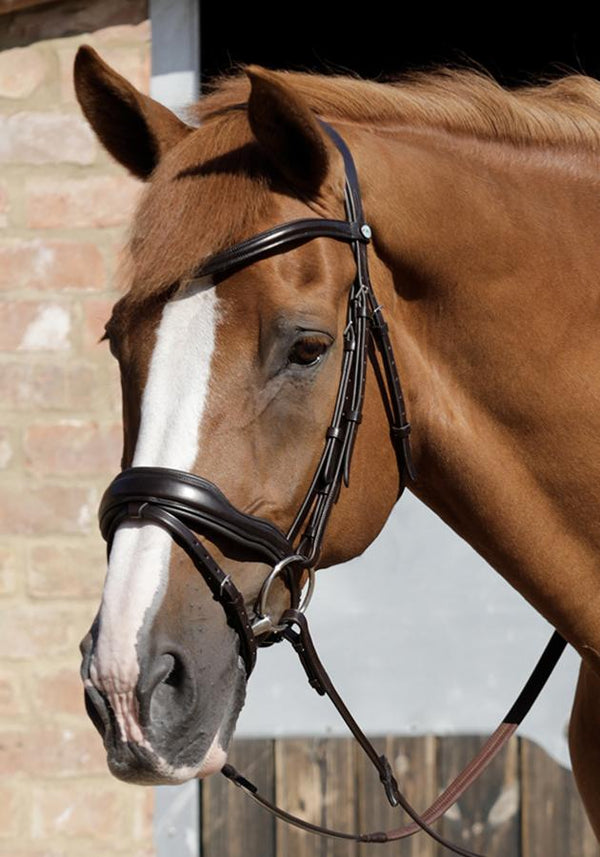 Rizzo Anatomic Snaffle Bridle with Flash