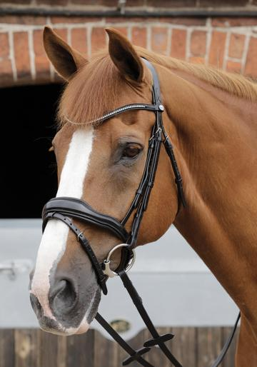 Stellazio Anatomic Snaffle Bridle with Flash