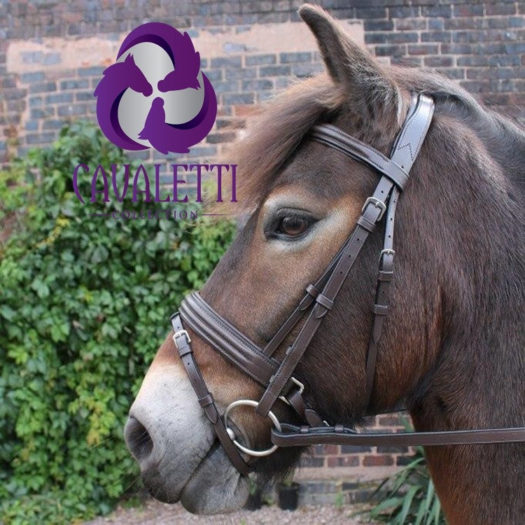 Cavaletti Discovery Flash Bridle