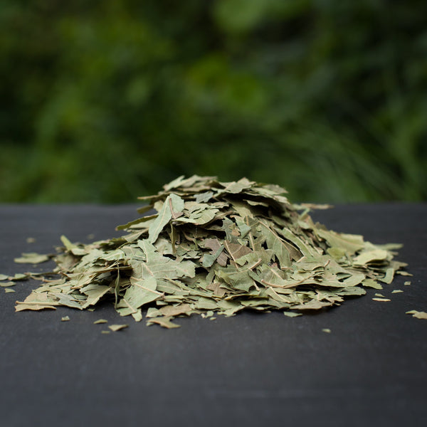 All Things Being Eco - Bulk Neem Leaves