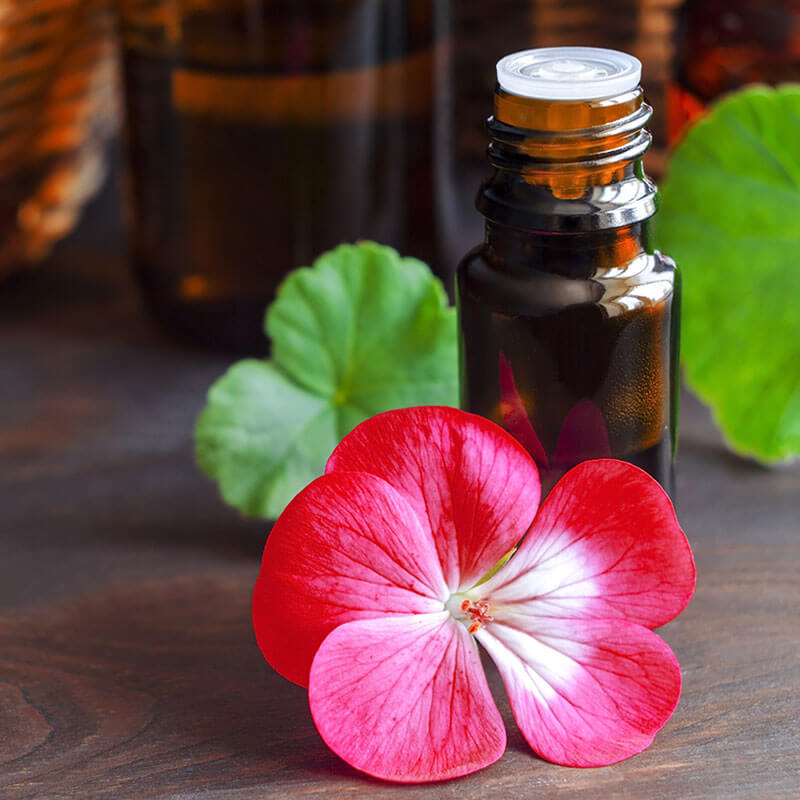 All Things Being Eco - Zero Waste Organic Geranium Bulk Essential Oil