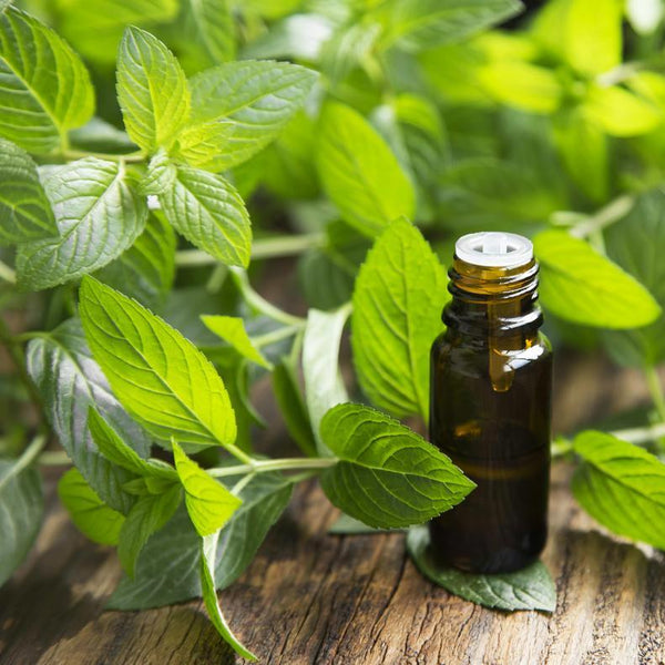 All Things Being Eco - Organic Spearmint Bulk Essential Oil