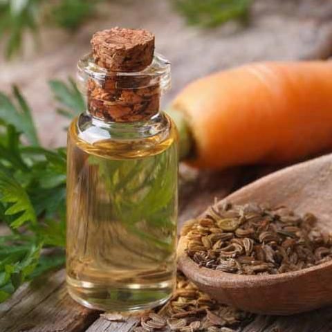 All Things Being Eco Carrot Carrier Oil