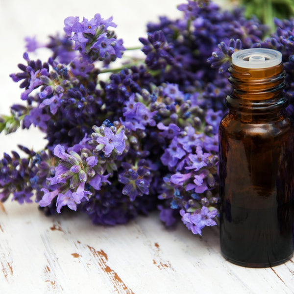 All Things Being Eco - Organic Lavender Bulk Essential Oil