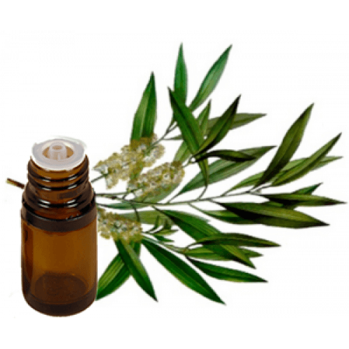 All Things Being Eco - Organic Australian Tea Tree Bulk Essential Oil