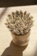 No Tox Life - Casa Agave Pot Scrubbing Brush All Things Being Eco Chilliwack Zero Waste Cleaning