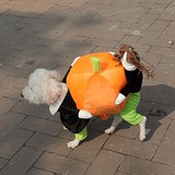 HalloPooch® Pumpkin Halloween Dog Costume L Halloween Products