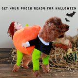 HalloPooch® Pumpkin Halloween Dog Costume M Halloween Products