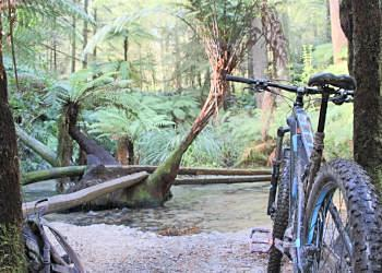 Auckland Private Tour - Redwoods Bike Park Rotorua - All Grades