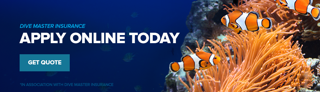 Apply online now!