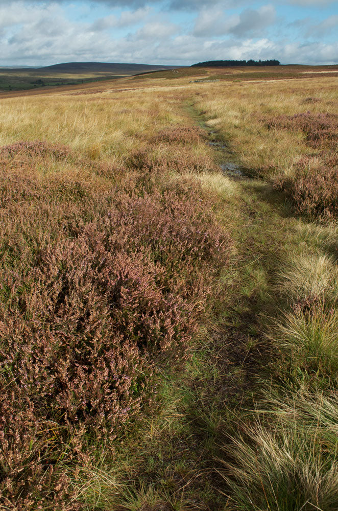 Sun-blessed-moorland2