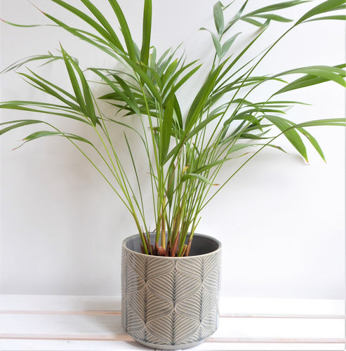 Grey Wavy Ceramic Plant Pot Cover by Gisela Graham