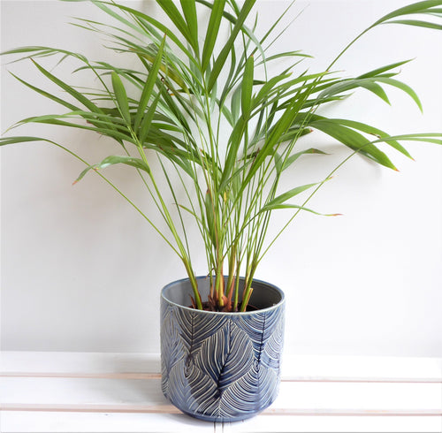 Navy Leaf Ceramic Plant Pot Cover by Gisela Graham.