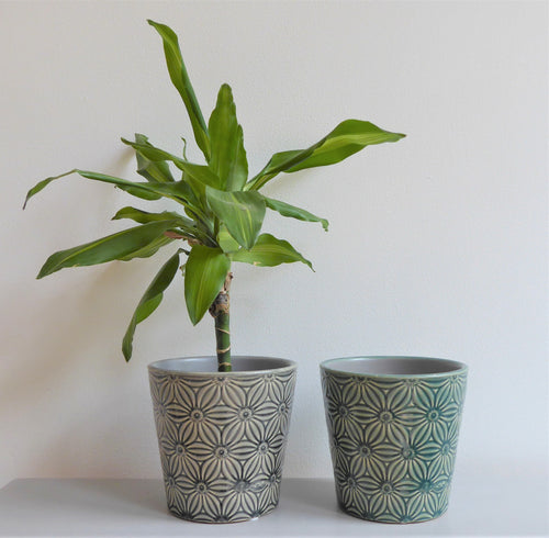 Asters Plant Pot Covers by Gisela Graham ~ Ceramic ~ Floral ~ Grey or Green