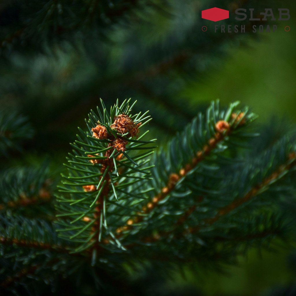 Douglas Fir Oil | Essential Oil | SLAB FRESH SOAP™