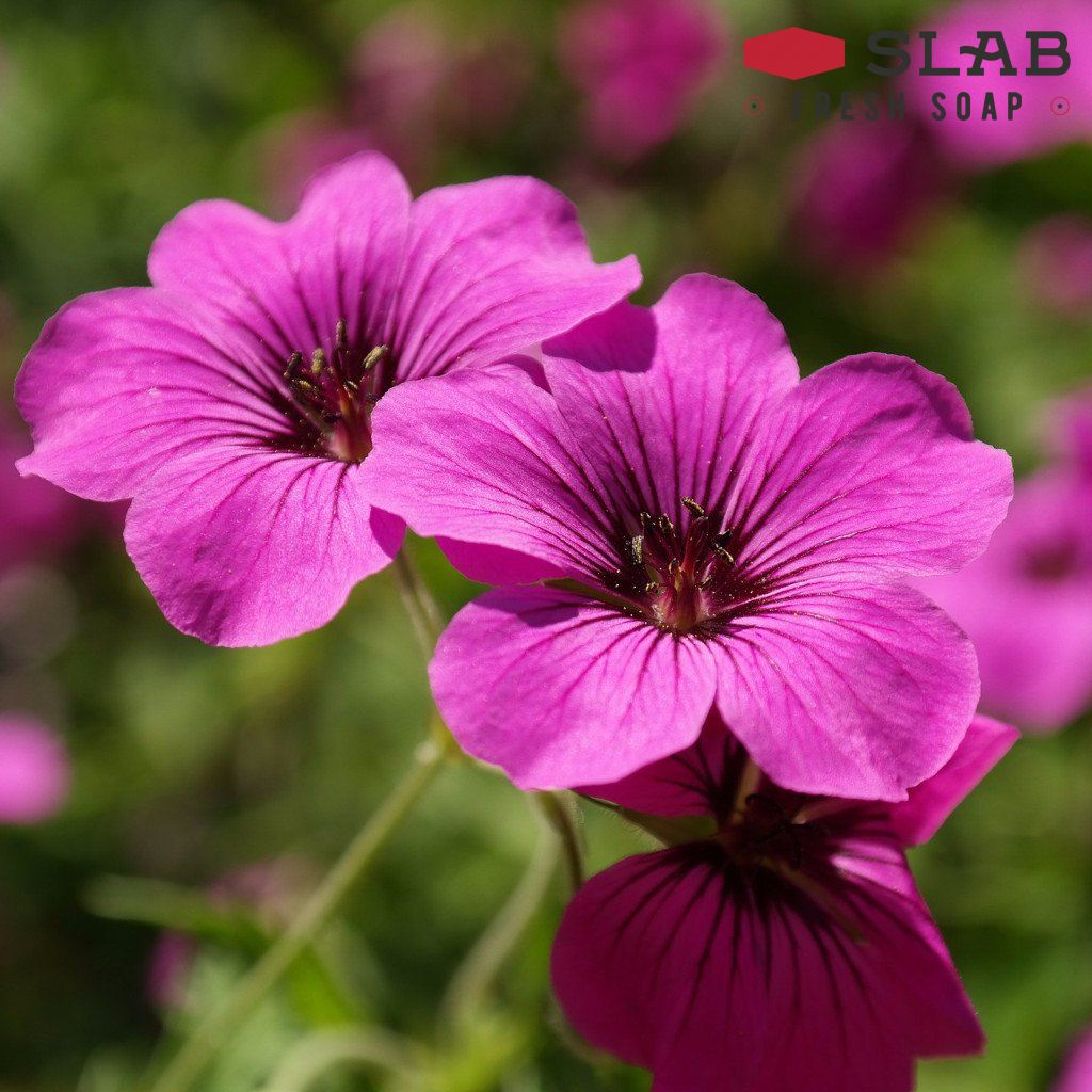 Geranium Oil | Essential Oil | SLAB FRESH SOAP™