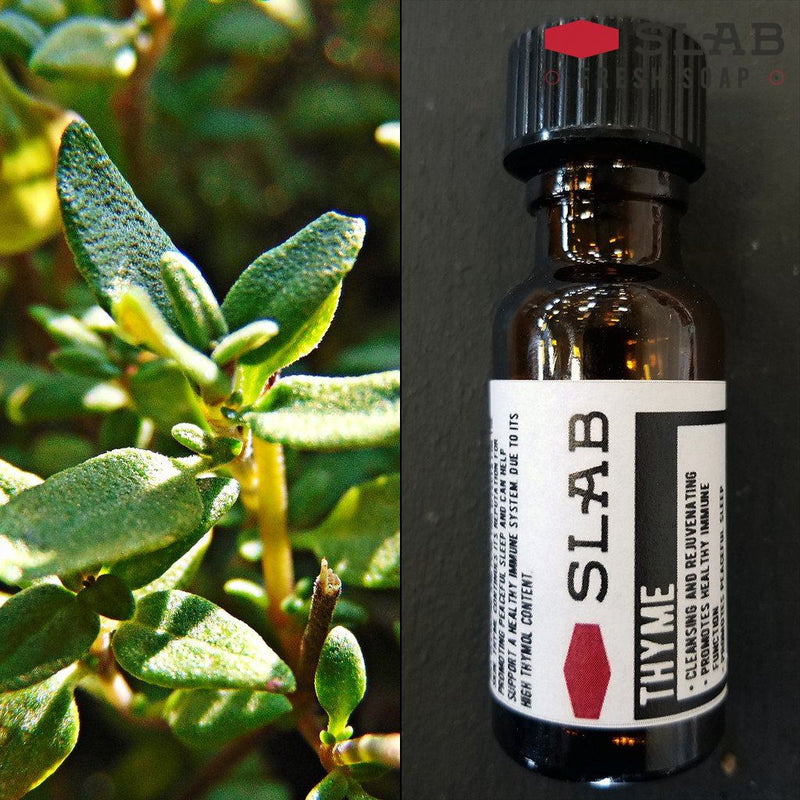 Thyme Oil | Essential Oil | SLAB FRESH SOAP™