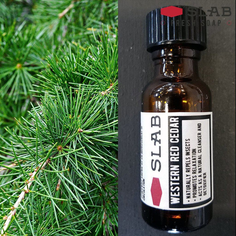 Western Red Cedar Oil | Essential Oil | SLAB FRESH SOAP™