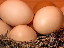 Free Range Eggs (medium)