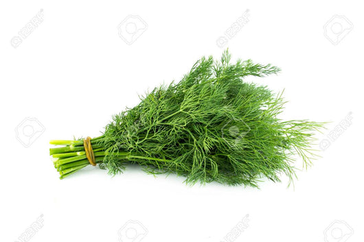 Fresh Herb -  Fennel (20g)