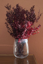 Dried Red Ruscus