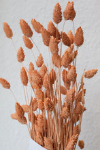 Dried Colored Phalaris Bundle
