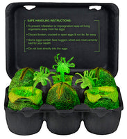Alien - Glow-in-the-Dark Egg Set in Collectible Carton - NECA 51361
